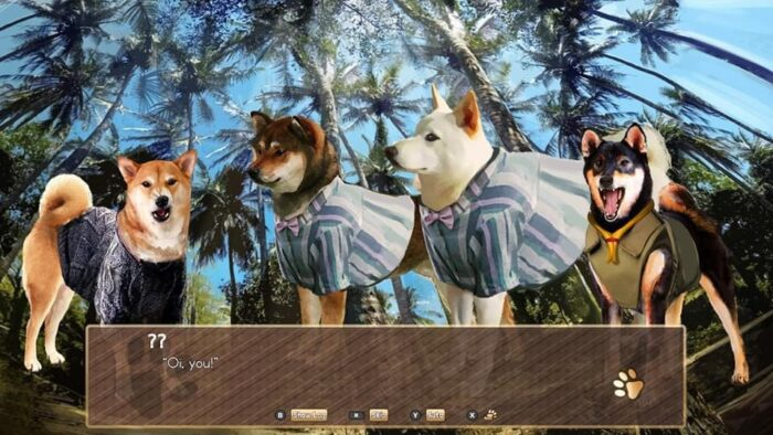 Dogs in A Summer with the Shiba Inu