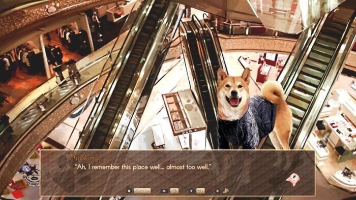 A Summer with the Shiba Inu Background